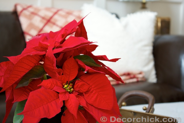 Poinsettia-Decor