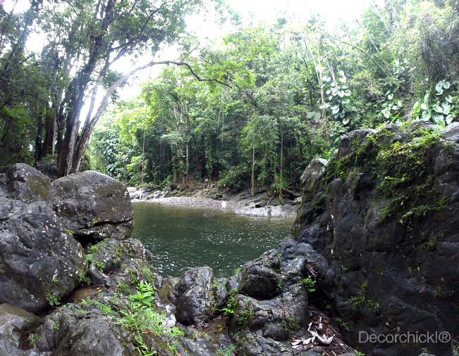 El Yunque Rainforest | Decorchick!®