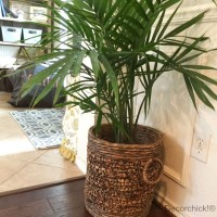 Houseplant | Decorchick!®
