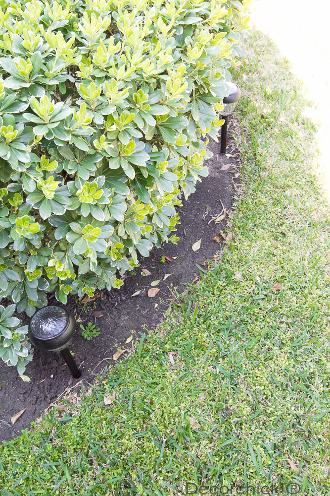 Solar Lights in Flower Bed | Decorchick!®