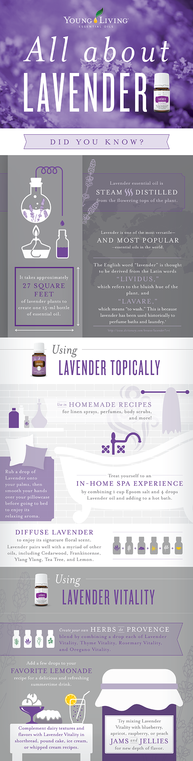 All About Lavender! | Decorchick!®